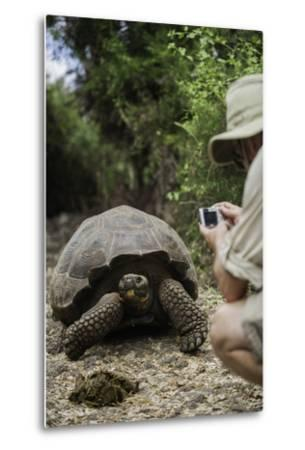 Tourist Photographing a Captive Galapagos Tortoise at the Charles Darwin Research Station-Jad Davenport-Metal Print