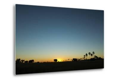 A Herd of an African Elephant, Loxodonta Africana, Graze in the Distance at Sunset-Beverly Joubert-Metal Print
