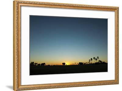 A Herd of an African Elephant, Loxodonta Africana, Graze in the Distance at Sunset-Beverly Joubert-Framed Photographic Print