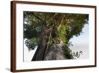 A Lion Cub, Panthera Leo, Relaxing on an Ant Hill under a Large Tree-Matthew Hood-Framed Photographic Print