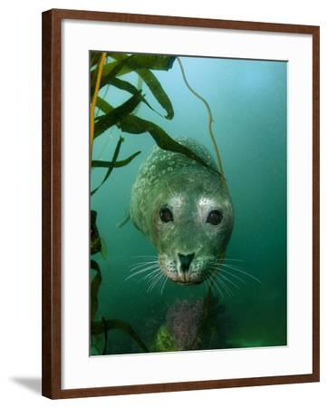 Portrait of a Harbor Seal-Jeff Wildermuth-Framed Photographic Print
