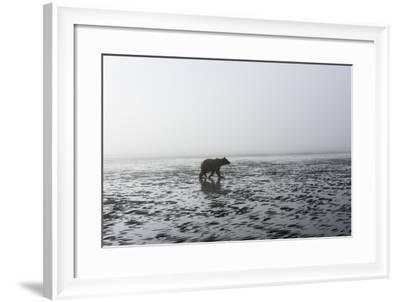 Brown Bear, Ursus Arctos, at Silver Salmon Creek Lodge in Lake Clark National Park-Charles Smith-Framed Photographic Print