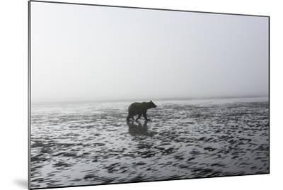 Brown Bear, Ursus Arctos, at Silver Salmon Creek Lodge in Lake Clark National Park-Charles Smith-Mounted Photographic Print