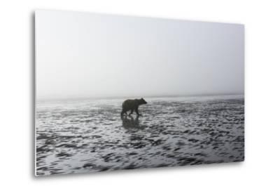 Brown Bear, Ursus Arctos, at Silver Salmon Creek Lodge in Lake Clark National Park-Charles Smith-Metal Print