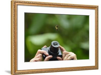 A Tourist Takes a Photograph of a Caterpillar Hanging from a Thread of Silk-Jonathan Kingston-Framed Photographic Print