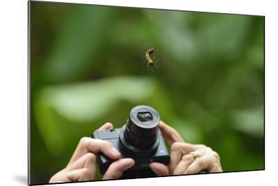 A Tourist Takes a Photograph of a Caterpillar Hanging from a Thread of Silk-Jonathan Kingston-Mounted Photographic Print