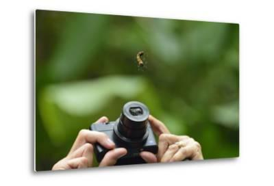 A Tourist Takes a Photograph of a Caterpillar Hanging from a Thread of Silk-Jonathan Kingston-Metal Print