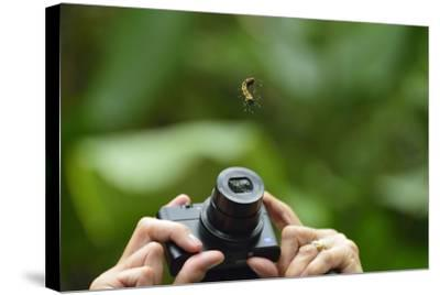 A Tourist Takes a Photograph of a Caterpillar Hanging from a Thread of Silk-Jonathan Kingston-Stretched Canvas Print