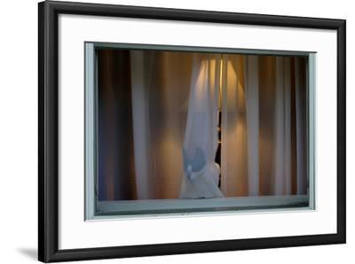 Cat Behind Window Curtain-Tyrone Turner-Framed Photographic Print