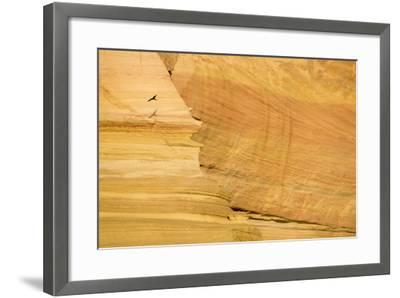 A Bird Flies at Sunrise Past Sandstone Cliffs of Isla San Jose-Michael Melford-Framed Photographic Print