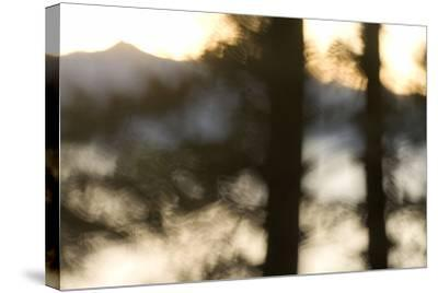 Abstract of Trees in Front of Crater Lake in Crater Lake National Park, Oregon-Philip Schermeister-Stretched Canvas Print