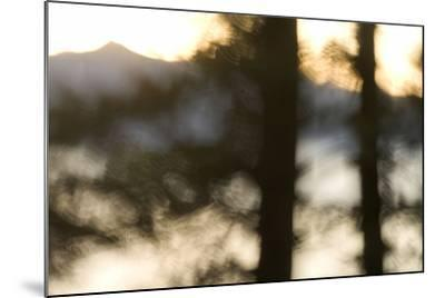 Abstract of Trees in Front of Crater Lake in Crater Lake National Park, Oregon-Philip Schermeister-Mounted Photographic Print