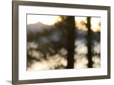 Abstract of Trees in Front of Crater Lake in Crater Lake National Park, Oregon-Philip Schermeister-Framed Photographic Print