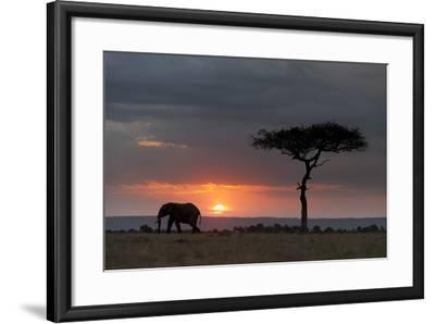 Silhouette of an African Elephants, Loxodonta Africana, Walking at Sunset-Sergio Pitamitz-Framed Photographic Print
