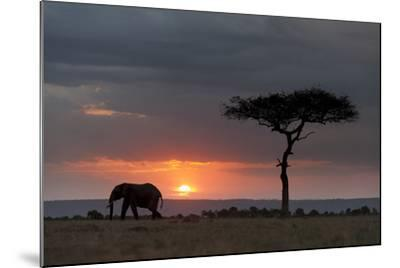 Silhouette of an African Elephants, Loxodonta Africana, Walking at Sunset-Sergio Pitamitz-Mounted Photographic Print