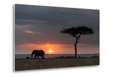 Silhouette of an African Elephants, Loxodonta Africana, Walking at Sunset-Sergio Pitamitz-Metal Print