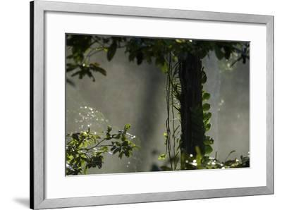 Early Morning Light in the Rain Forest of Halmahera Island, Indonesia-Timothy Laman-Framed Photographic Print