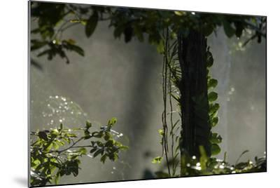 Early Morning Light in the Rain Forest of Halmahera Island, Indonesia-Timothy Laman-Mounted Photographic Print