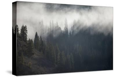 A Forest in Montana-Cory Richards-Stretched Canvas Print