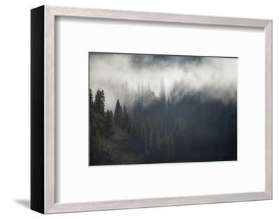 A Forest in Montana-Cory Richards-Framed Photographic Print