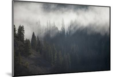 A Forest in Montana-Cory Richards-Mounted Photographic Print