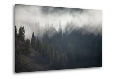 A Forest in Montana-Cory Richards-Metal Print