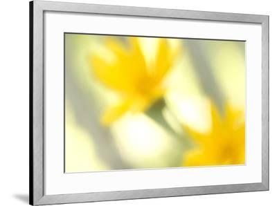 Abstract of Wildflower in Early Morning in the Inyo National Forest, California-Philip Schermeister-Framed Photographic Print