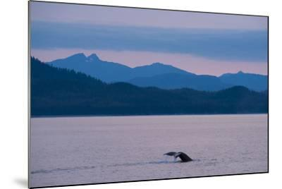 Humpback Whale in Stephens Passage-Michael Melford-Mounted Photographic Print