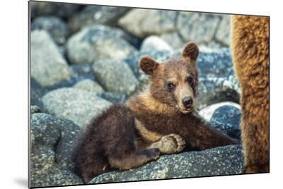 Brown Bear, Ursus Arctos, Cub Resting on a Rock in Katmai National Park and Preserve-Tom Murphy-Mounted Photographic Print