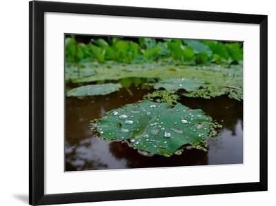 Water Drops on a Water Lily, Nymphaeaceae, Floating on Water-Tyrone Turner-Framed Photographic Print