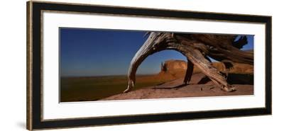 A Dead Mesquite Trees and Buttes-Raul Touzon-Framed Photographic Print