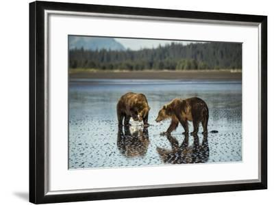 Brown Bear Walking at Silver Salmon Creek Lodge in Lake Clark National Park-Charles Smith-Framed Photographic Print