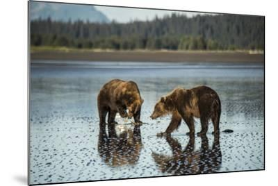 Brown Bear Walking at Silver Salmon Creek Lodge in Lake Clark National Park-Charles Smith-Mounted Photographic Print