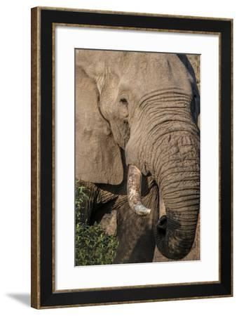 The Big Boss-Romona Murdock-Framed Photographic Print