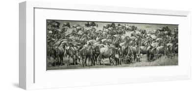 Wildebeests-Joani White-Framed Premium Photographic Print