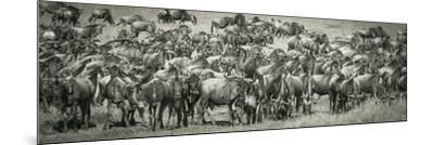 Wildebeests-Joani White-Mounted Premium Photographic Print