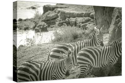 Watering Hole-Joani White-Stretched Canvas Print