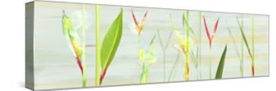 Stems in Tropics I- Shams-Saba-Stretched Canvas Print