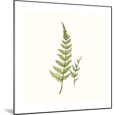 Watercolor Forest Ferns-Natasha Marie-Mounted Premium Giclee Print