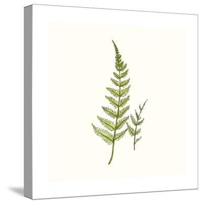 Watercolor Forest Ferns-Natasha Marie-Stretched Canvas Print