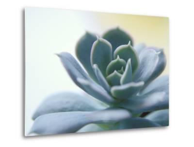 Succulent Spike-Karen Ussery-Metal Print