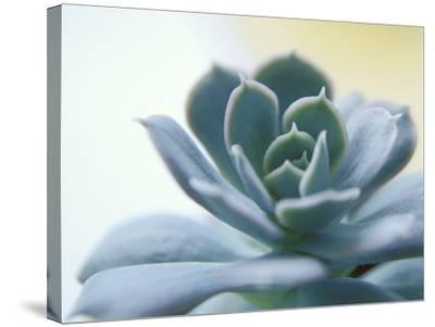 Succulent Spike-Karen Ussery-Stretched Canvas Print