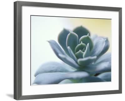 Succulent Spike-Karen Ussery-Framed Premium Photographic Print