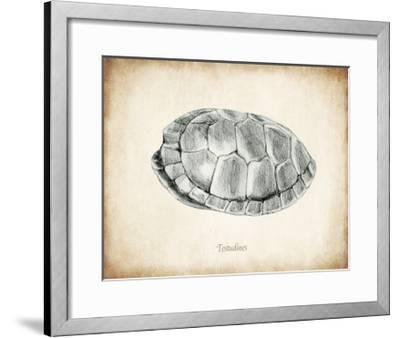 Testudines Shell A-THE Studio-Framed Premium Giclee Print