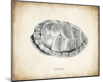 Testudines Shell A-THE Studio-Mounted Premium Giclee Print