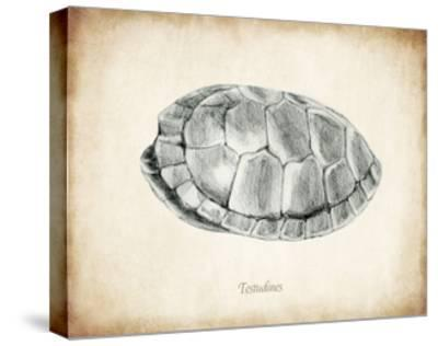 Testudines Shell A-THE Studio-Stretched Canvas Print