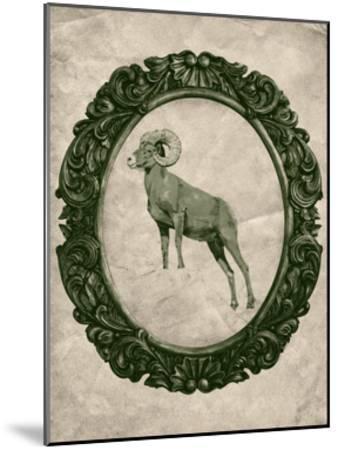 Framed Bighorn Sheep in Evergreen-THE Studio-Mounted Premium Giclee Print