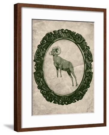 Framed Bighorn Sheep in Evergreen-THE Studio-Framed Premium Giclee Print
