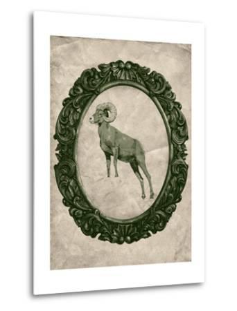 Framed Bighorn Sheep in Evergreen-THE Studio-Metal Print
