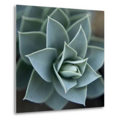 Star Plant 1-Karen Ussery-Metal Print